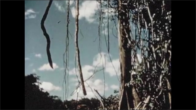 1950s: Hand moves silt and water around in pan. Water falls from mountainside. Wines hang from trees in jungle. Oil drill tower rises into sky.